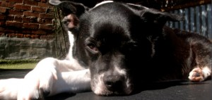 Just Pet Me offers East Bay Dog Boarding: Read our Testimonials!