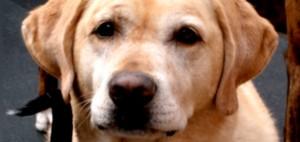 Doggie Daycare Serving Oakland, Piedmont, Montclair, Berkeley, and Emeryville