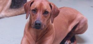 Doggie Daycare serving Oakland, Piedmont, Montclair, Berkeley, Emeryville
