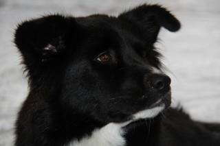 Dog of the Week: Presley