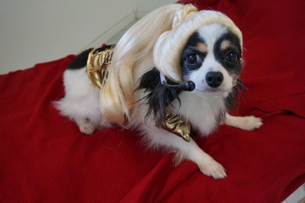 Bailey the Pop Star