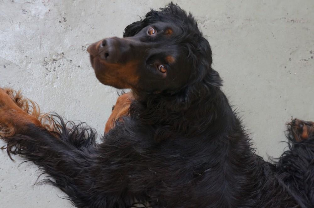Dog of the Week: Duke