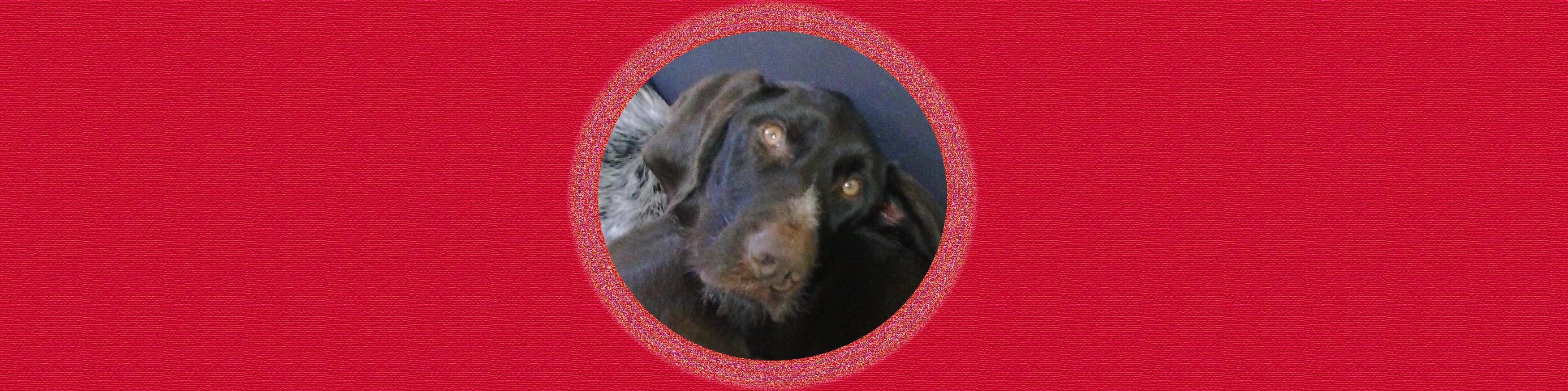 Dog of the Week: Bogey