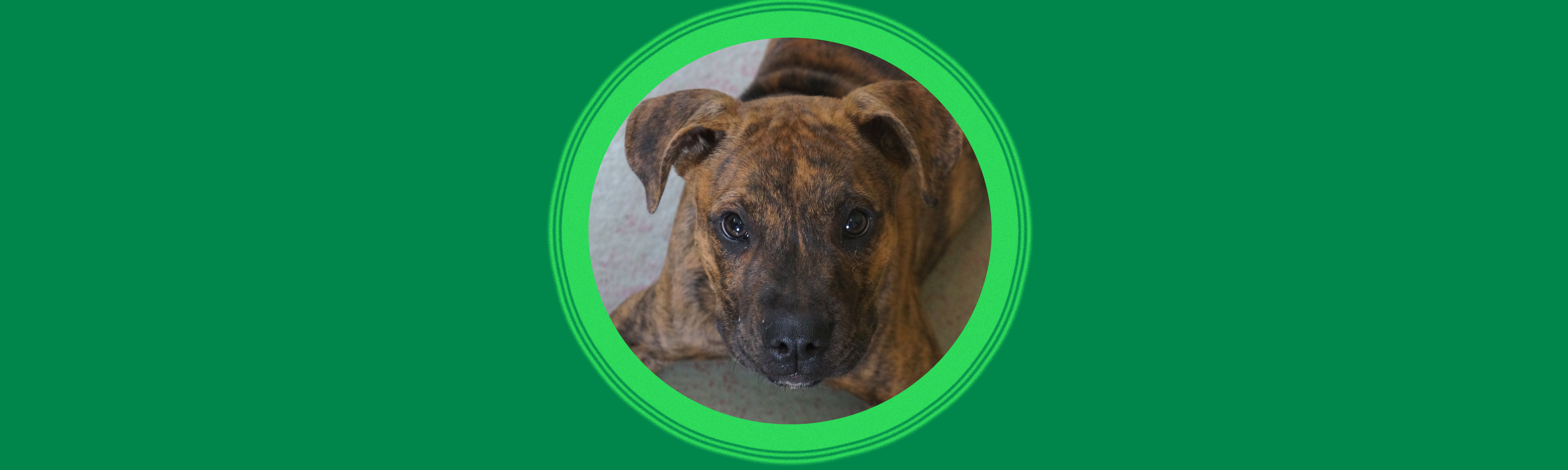 Dog of the Week: Mozart