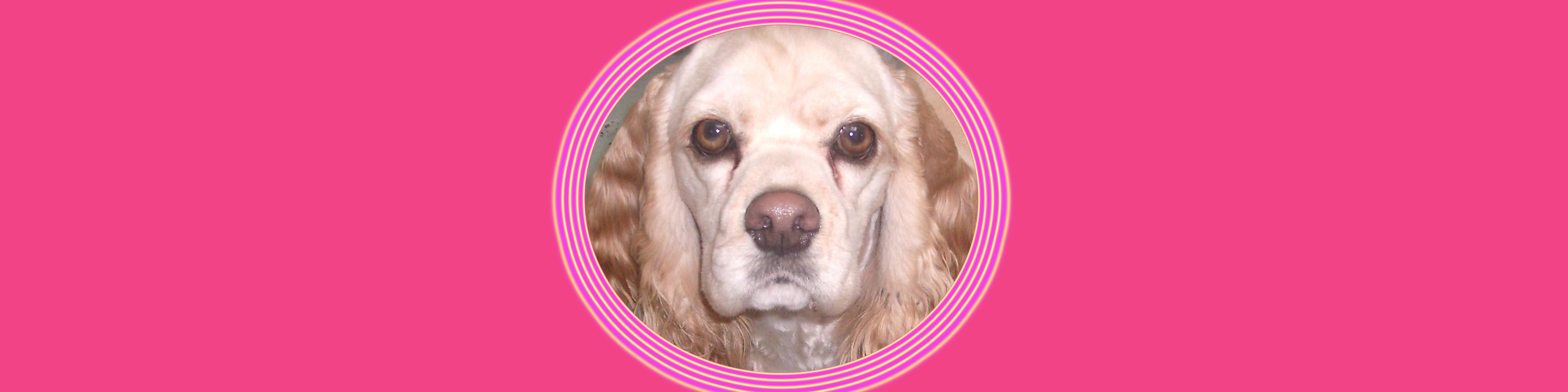 Dog of the Week: Elle Woods