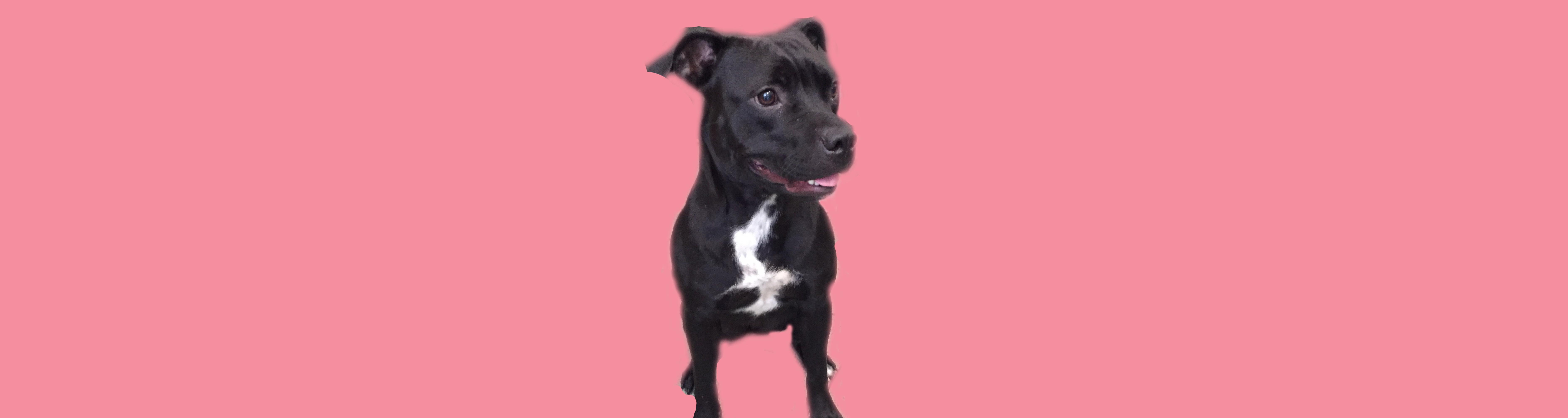 Dog of the Week: Miri