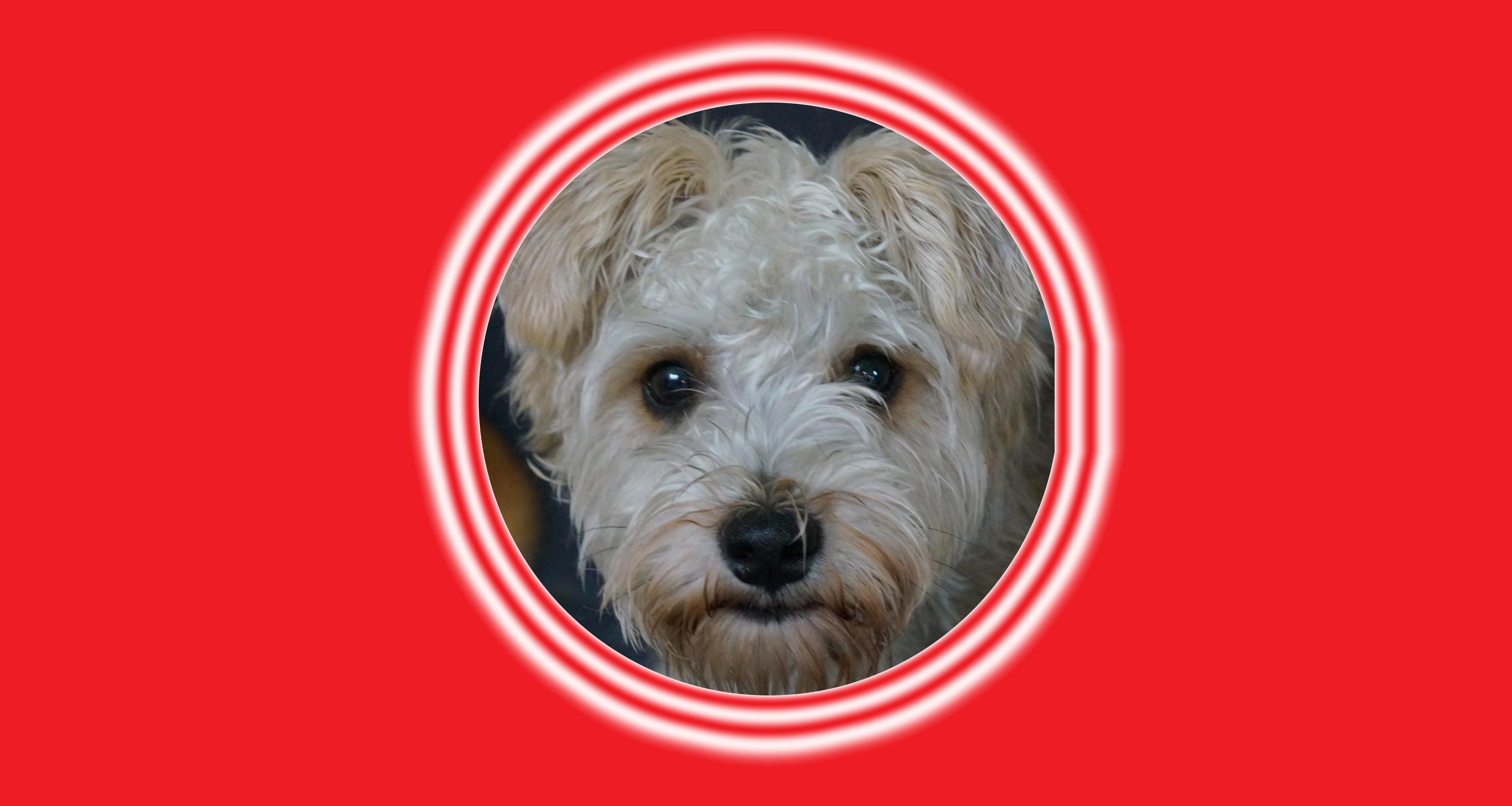 Dog of the Week: Luka J