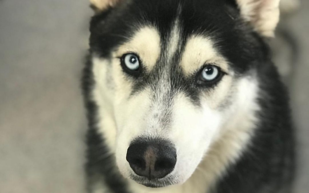 Dog of the Week: Keshy