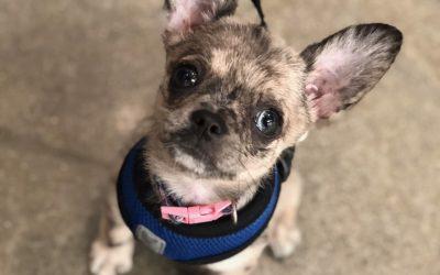 Dog of the Week: Chloe