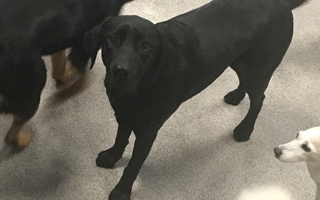 Dog of The Week: (Puppy) Shadow