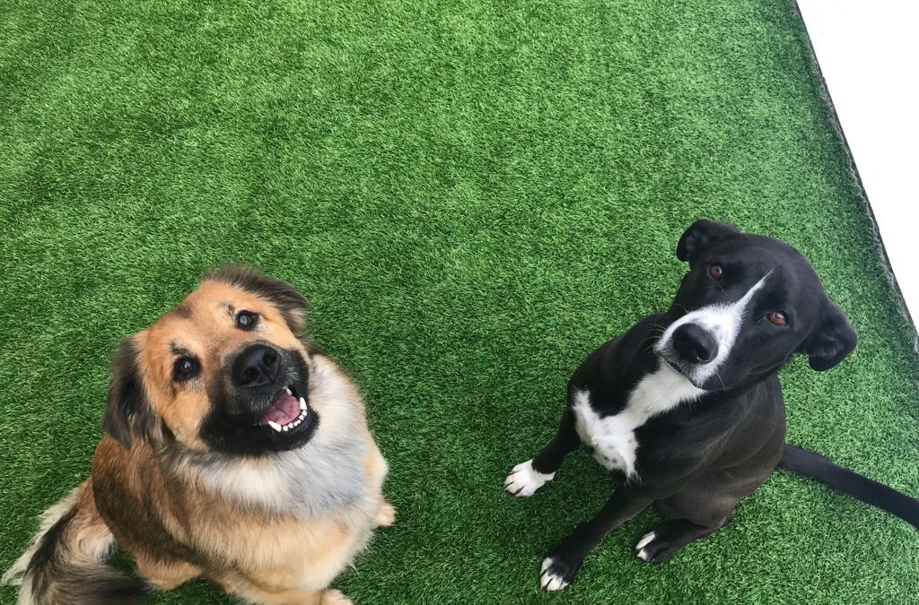 Dogs of the week: Perri & Cosmo